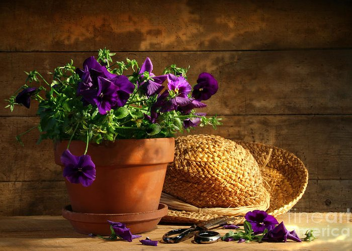 Flower Greeting Card featuring the photograph Pruning Purple Pansies by Sandra Cunningham
