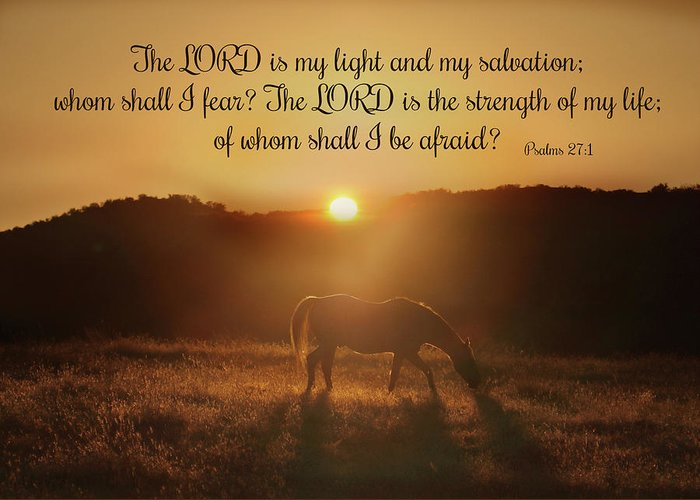 Psalms The Lord Is My Light Horse In The Sunrise Bible
