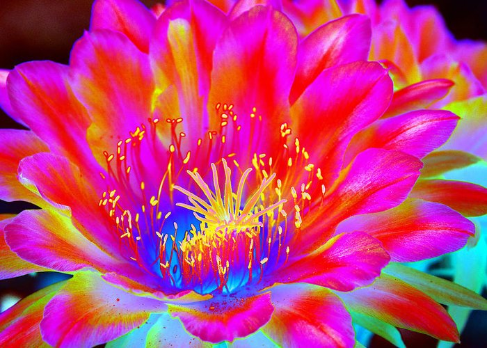 Flower Greeting Card featuring the photograph Psychedelic Pink Flower by Richard Henne