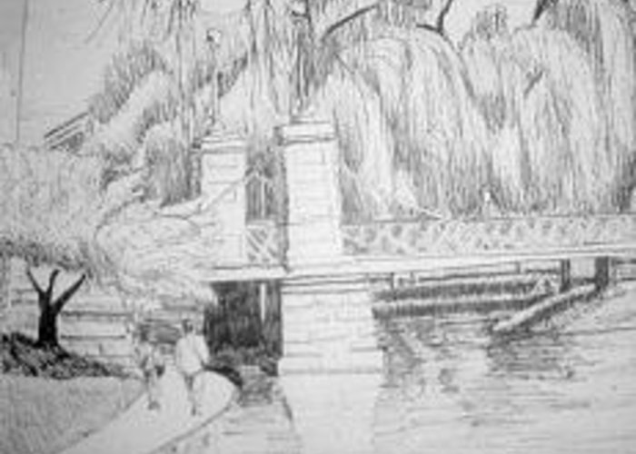 Boston Greeting Card featuring the drawing Public Gardens by Lisa Guarino