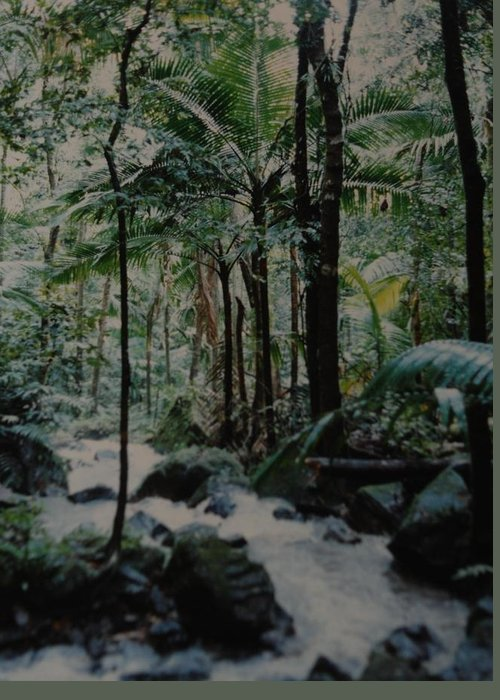 Trees Greeting Card featuring the photograph Puerto Rico by Rob Hans