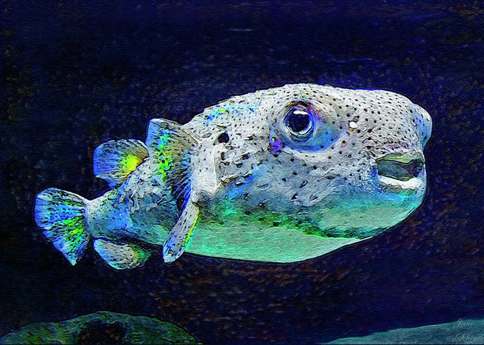 Porcupine Fish Digital Art Greeting Cards