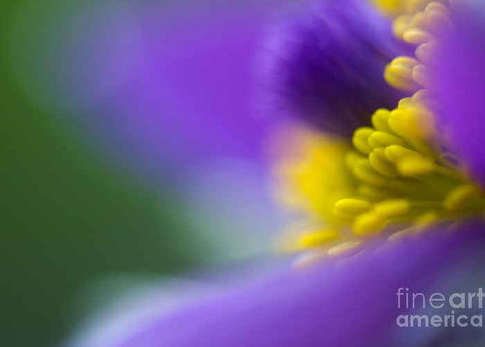 Flower Greeting Card featuring the photograph Pulsatilla by Silke Magino