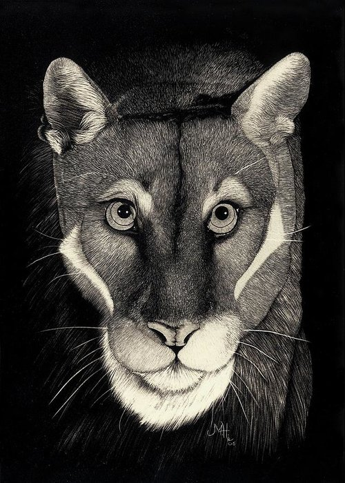 Puma Greeting Card featuring the drawing Puma by Mike Hinojosa