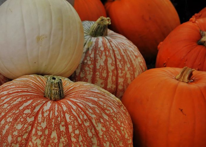 Pumpkin Greeting Card featuring the photograph Pumpkin Colors by JAMART Photography