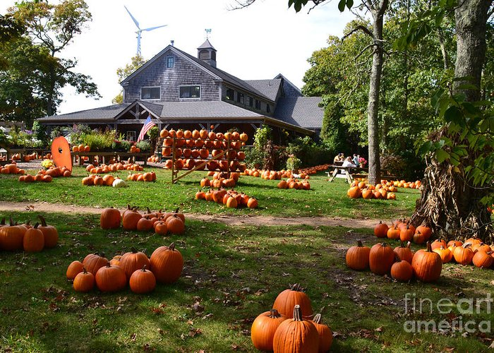 Pumpkins Greeting Card featuring the photograph Pumpkins In Martha's Vineyard Farm by Rossano Ossi
