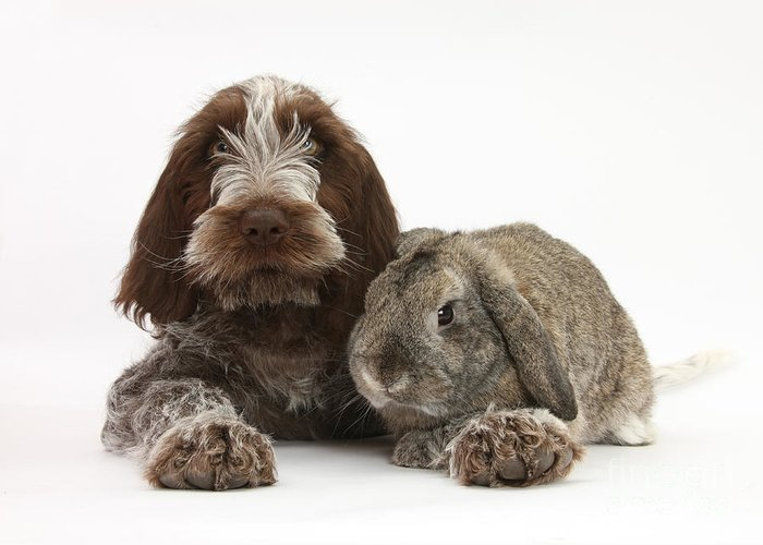 Animal Greeting Card featuring the photograph Puppy And Rabbt by Mark Taylor
