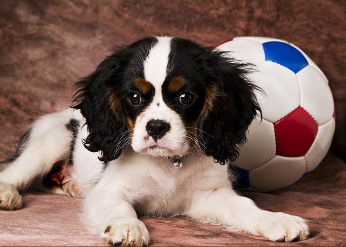 Puppy Dog Cute Doggy Domestic Pup Pet Pedigree Canine Creature Soccer Ball Greeting Card featuring the photograph Puppy With Ball by Garry Gay