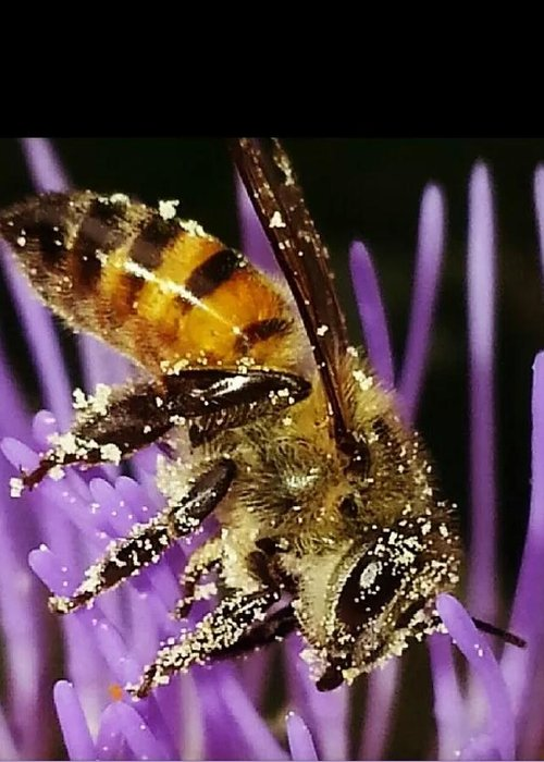 Insect Greeting Card featuring the photograph Purpel Nectar by Michelle Nortje