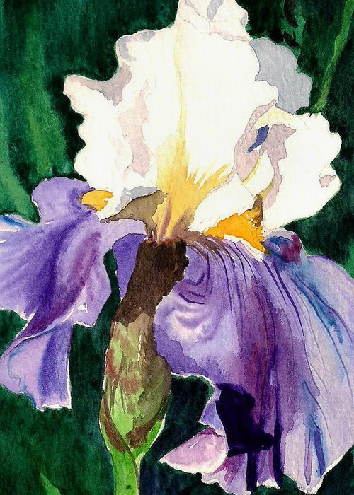 Flower Greeting Card featuring the painting Purple And White Iris by Janis Grau