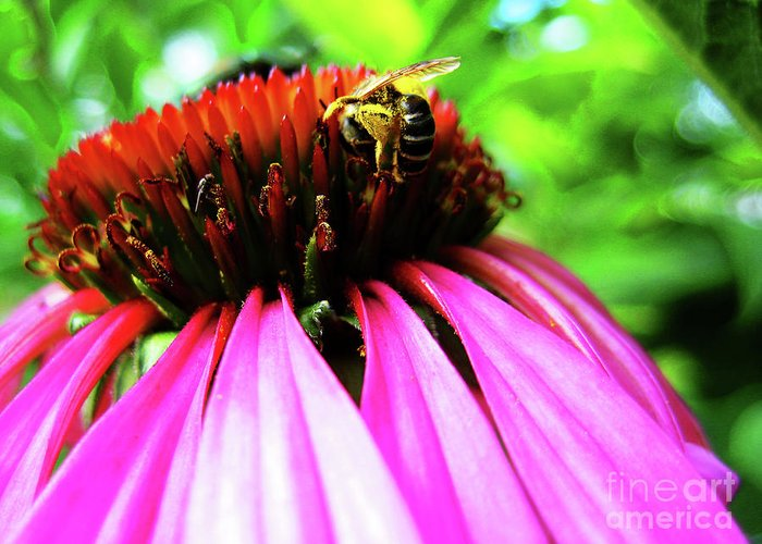 Purple Greeting Card featuring the photograph Purple Cone Flower by Maria Massimiano