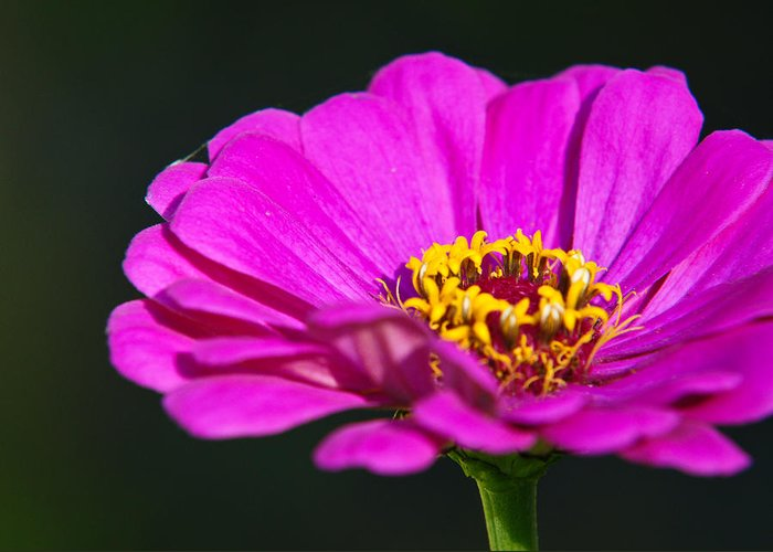 Flower Greeting Card featuring the photograph Purple Flower Close Up by Edward Myers