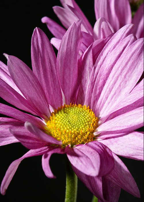 Botanical Greeting Card featuring the photograph Purple Flower by Edward Myers