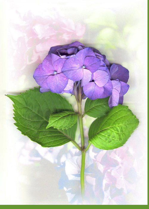 Purple Greeting Card featuring the mixed media Purple Hydrangea by Sandi F Hutchins