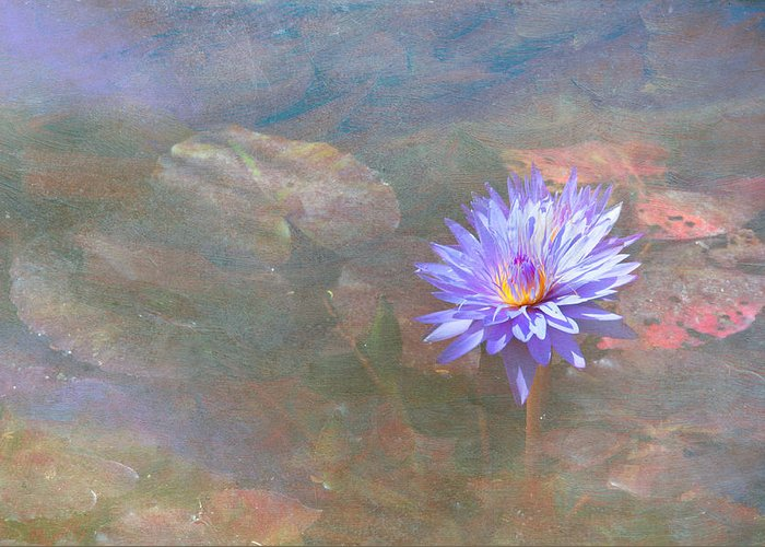 Waterlily Water Flower Greeting Card featuring the photograph Purple Lily by Carolyn Dalessandro
