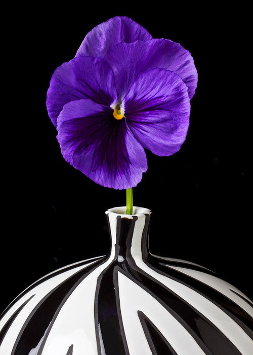 Purple Greeting Card featuring the photograph Purple Pansy by Garry Gay