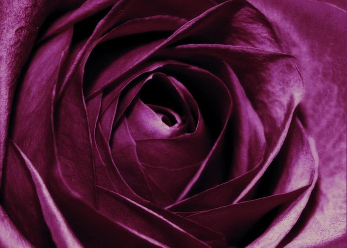 Flowers Greeting Card featuring the photograph Purple Passion by Cathie Tyler