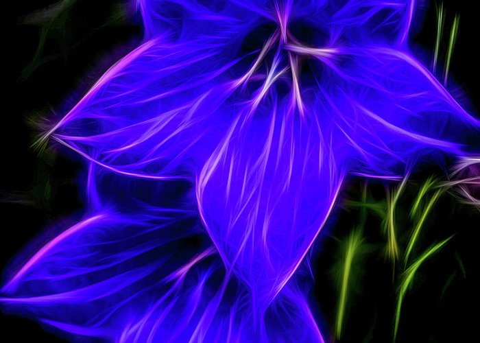 Purple Balloon Flower Greeting Card featuring the photograph Purple Passion by Joann Copeland-Paul