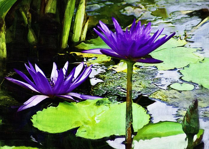 Flower Greeting Card featuring the photograph Purple Water Lilies by D W Steinbarger