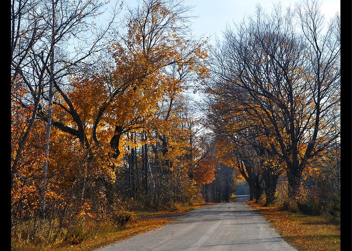Road Greeting Card featuring the photograph Quarterline Road by Tim Nyberg