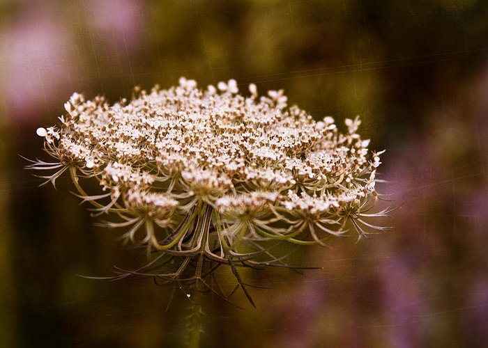 Queen Anne's Lace Greeting Card featuring the digital art Queen Anne's Lace 4 by Gwen Vann-Horn