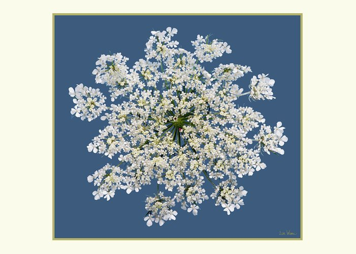 Lise Winne Greeting Card featuring the photograph Queen Anne's Lace Flower by Lise Winne