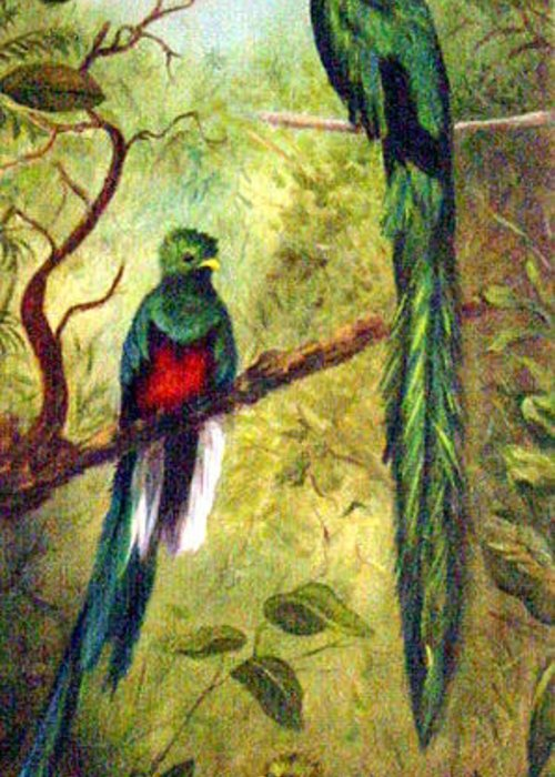 Landscape Greeting Card featuring the painting Quetzels by Anne Kushnick