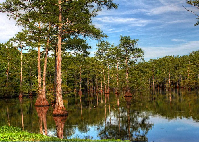 Quiet Greeting Card featuring the photograph Quiet Afternoon At The Bayou by Ester McGuire