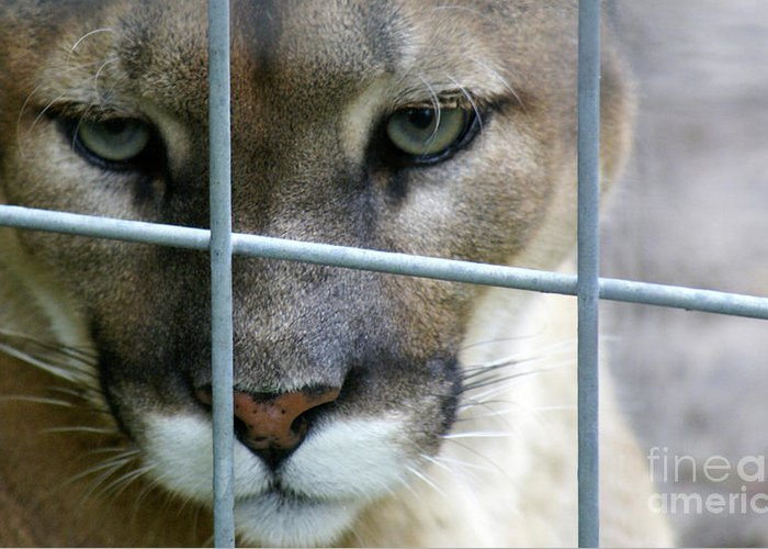 Caged Greeting Card featuring the photograph Quiet Thoughts by Linda Shafer