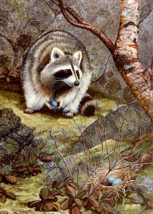 Raccoon Found Treasure Greeting Card featuring the painting Raccoon Found Treasure by Frank Wilson