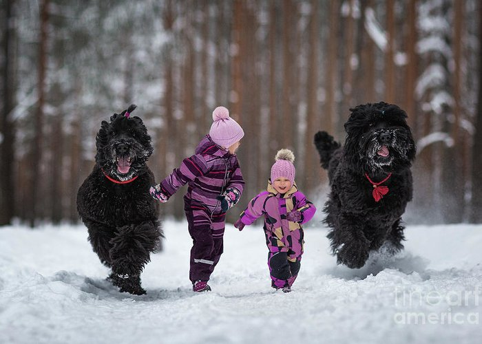 Black Russian Terriers Greeting Card featuring the photograph Race You by Andy Seliverstoff