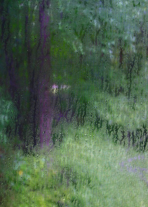 Rain Greeting Card featuring the photograph Rain IV by Beebe Barksdale-Bruner