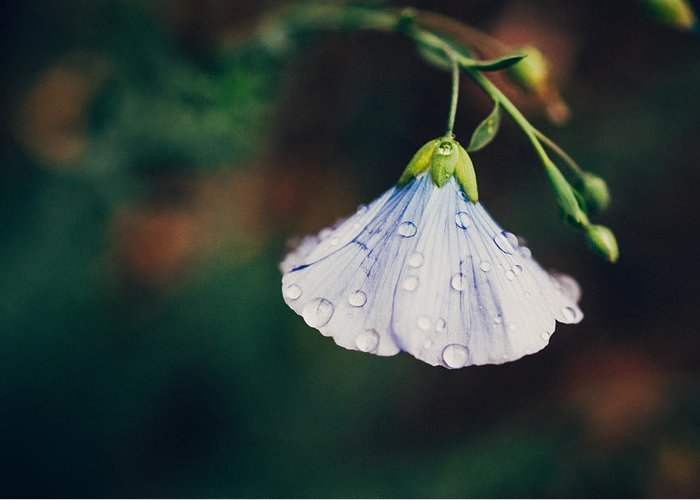 Macro Greeting Card featuring the photograph Rain Tickled by Tracy Jade