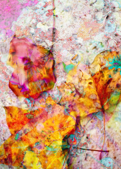 Abstract Leaves Greeting Card featuring the photograph Rainbow Abstract Leaves by Suzanne Powers