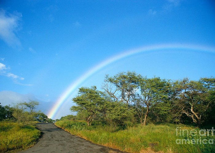 Arch Greeting Card featuring the photograph Rainbow Over Treetops by Peter French - Printscapes