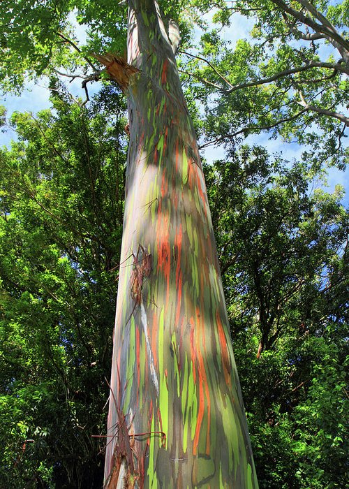 Rainbow Greeting Card featuring the photograph Rainbow Tree by Pierre Leclerc Photography
