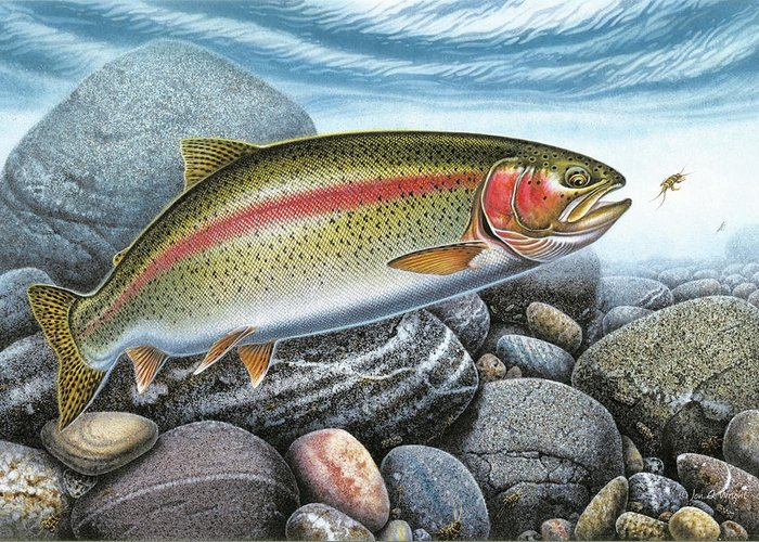 Trout Streams Greeting Cards