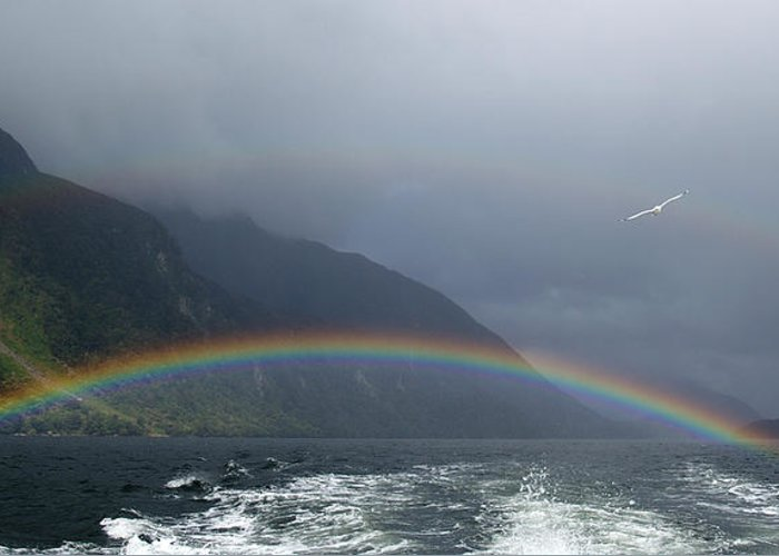 Rainbow Greeting Card featuring the photograph Rainbows by Jessica Rose