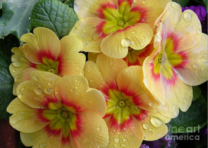 Yellow Flowers Greeting Card featuring the photograph Raindrops On Yellow Flowers by Carol Groenen
