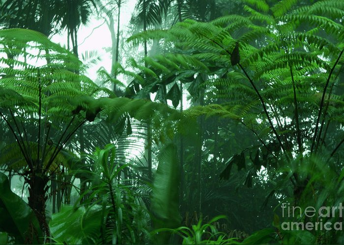 Rain Forest Greeting Card featuring the photograph Rainforest by Marie Loh