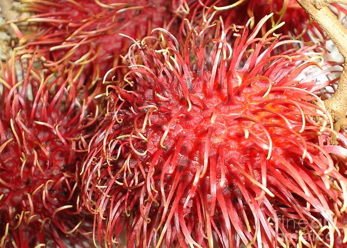 Fruit Close Up Greeting Card featuring the photograph Rambutan by Chandelle Hazen