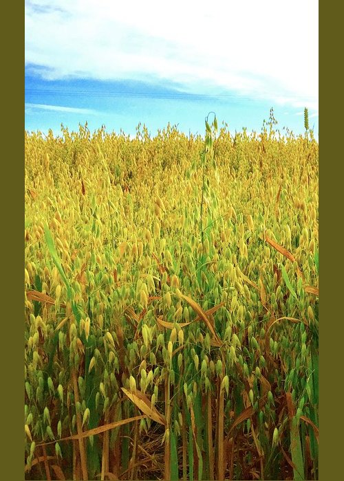 Rapeseed Greeting Card featuring the photograph Rapeseed by Caroline Reyes-Loughrey