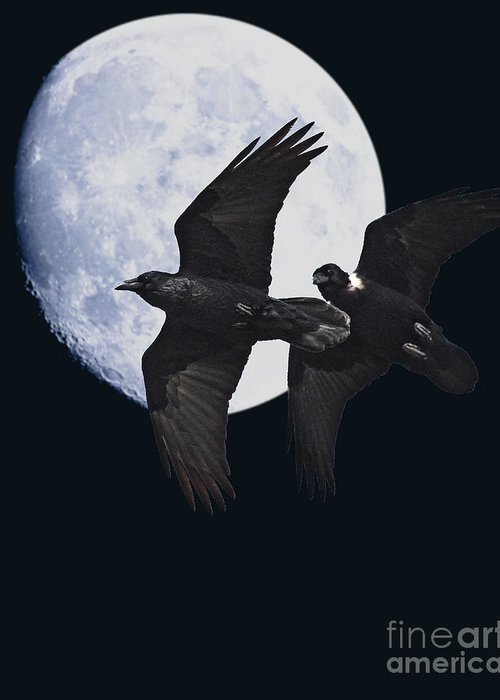 Black And White Greeting Card featuring the photograph Ravens Of The Night by Wingsdomain Art and Photography