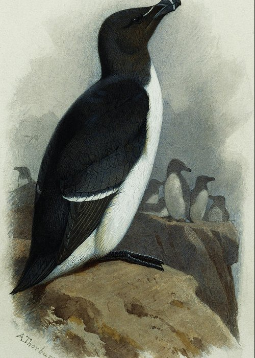 Razorbill Greeting Cards