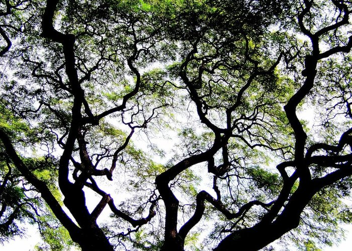 Trees Greeting Card featuring the photograph Reach For The Sky by Karen Wiles