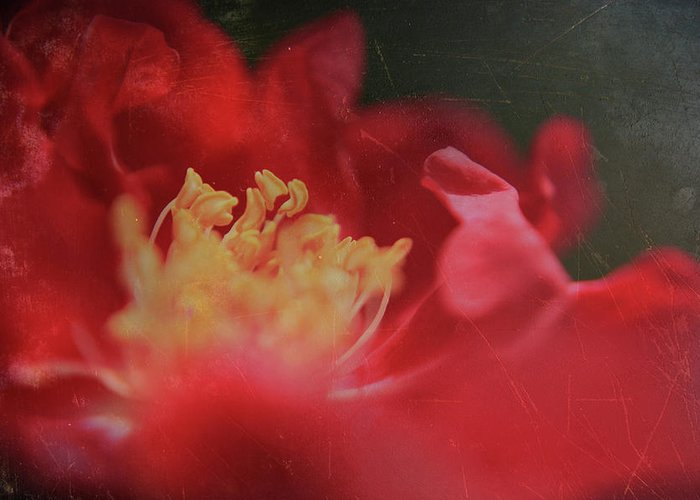 Macro Greeting Card featuring the photograph Reaching For Joy by Laurie Search