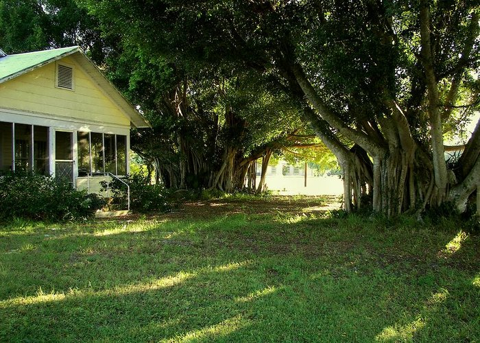 Real Florida Living Greeting Card featuring the photograph Real Florida Yard by Charles Peck