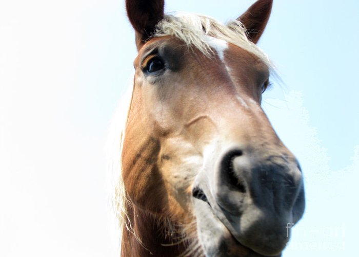 Horse Greeting Card featuring the photograph Really by Amanda Barcon