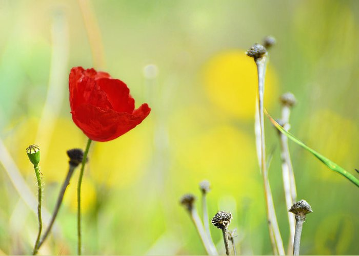 Poppy Greeting Card featuring the photograph Red And Yellow by Guido Montanes Castillo