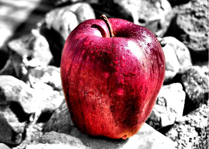 Red Apple Greeting Card featuring the photograph Red Apple by Karen M Scovill